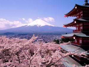 picturesque-sakura-fujiyama-tokyo-japan