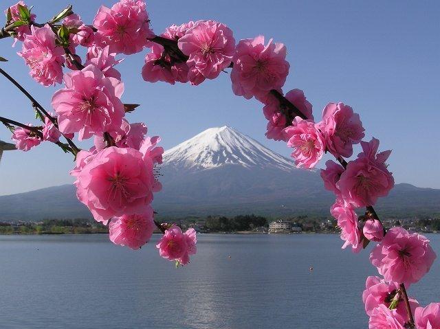 http://www.asahidojo.org/sito/wp-content/uploads/2013/04/Fuji2-6.jpg